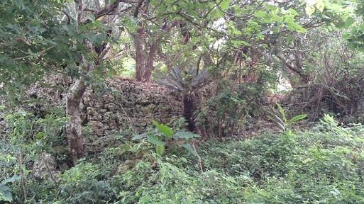 玉城グスク(たまぐすくぐすく)画像
