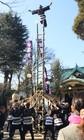 梯子乗り披露 須賀神社